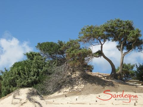 Sand dunes of Chia, 17 km. away