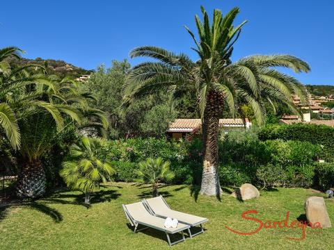 Garden with palm trees and sunbeds